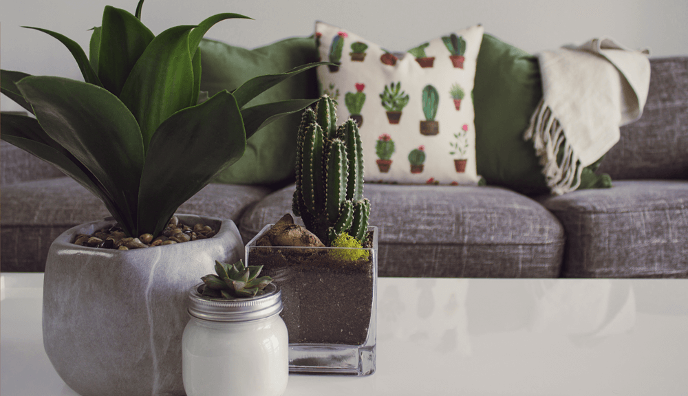 succulents in grey pots on table infront of grey sofa with cactus cushion