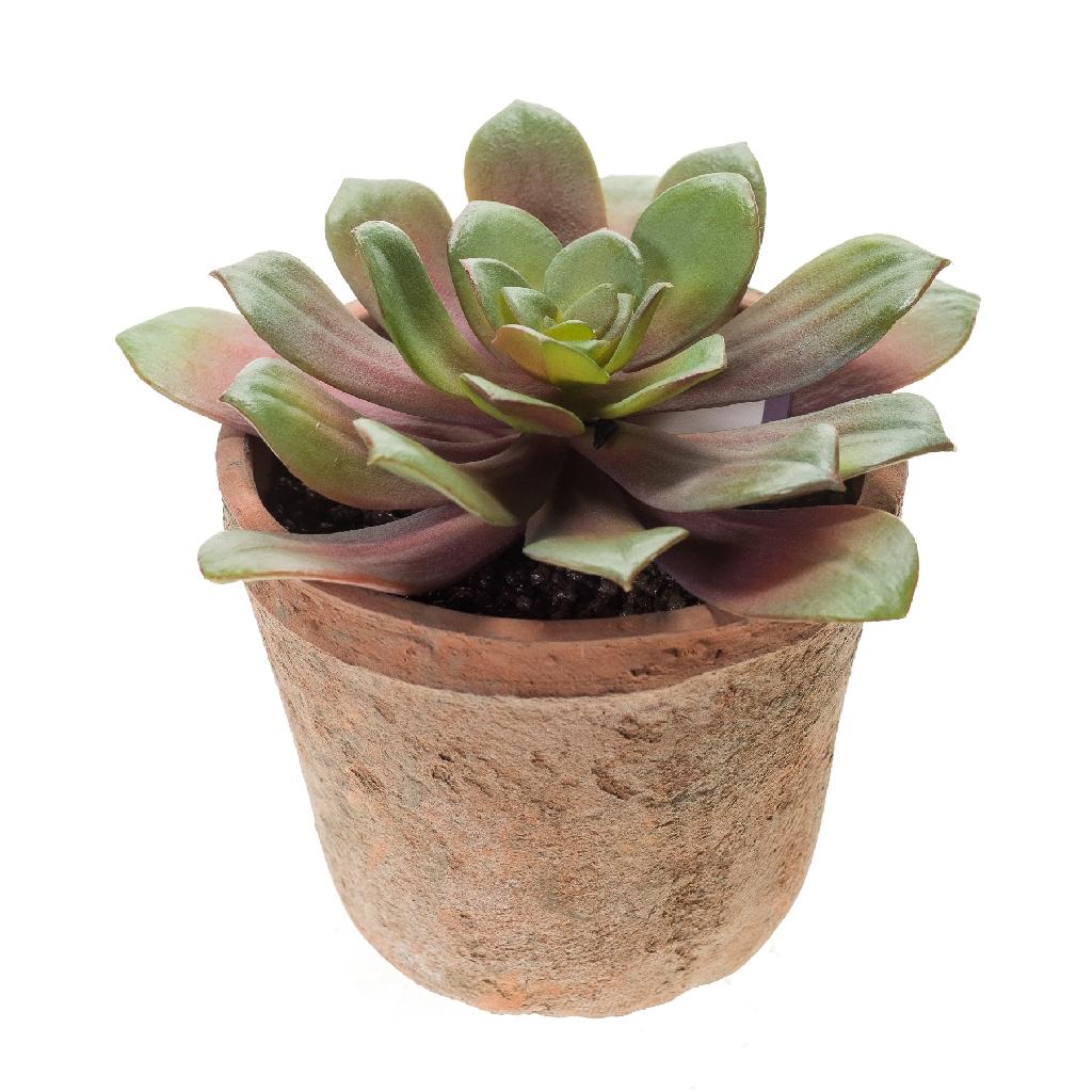 Artificial Echeveria Bush Succulent Potted Plant - Green/Burgundy