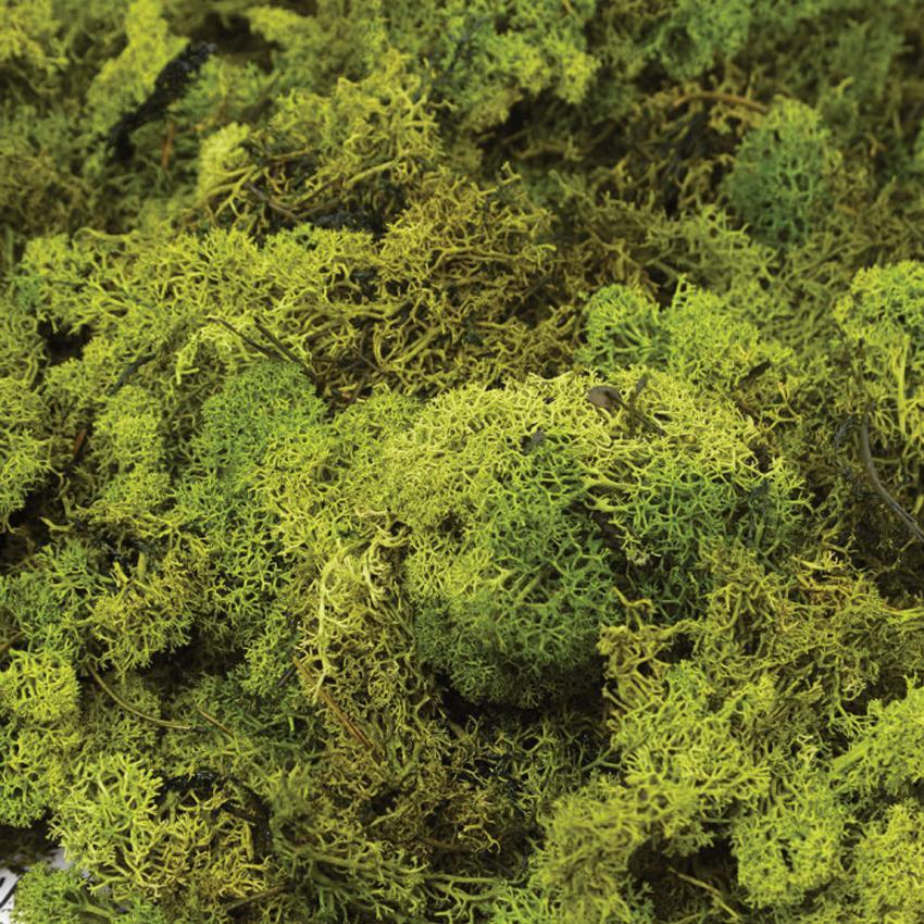 Oasis Finland Moss Dark Green