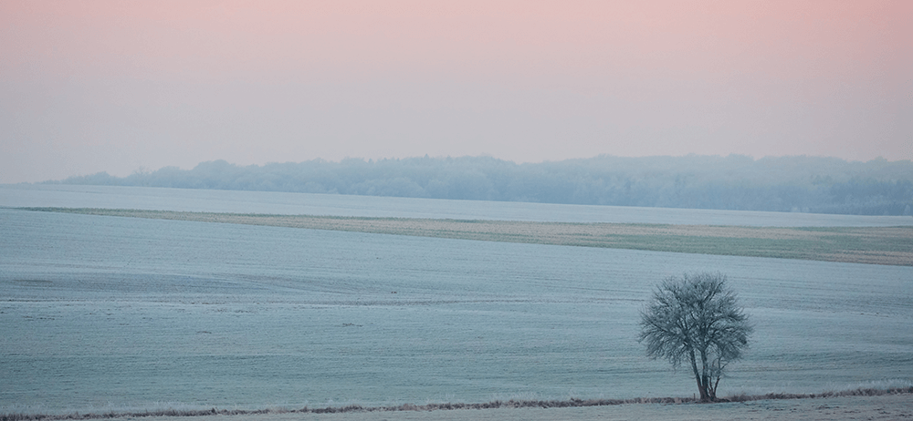 pink winter skies frosty landscape with single tree