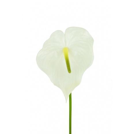 artificial anthurium cream - soft neutral floral trends 2020
