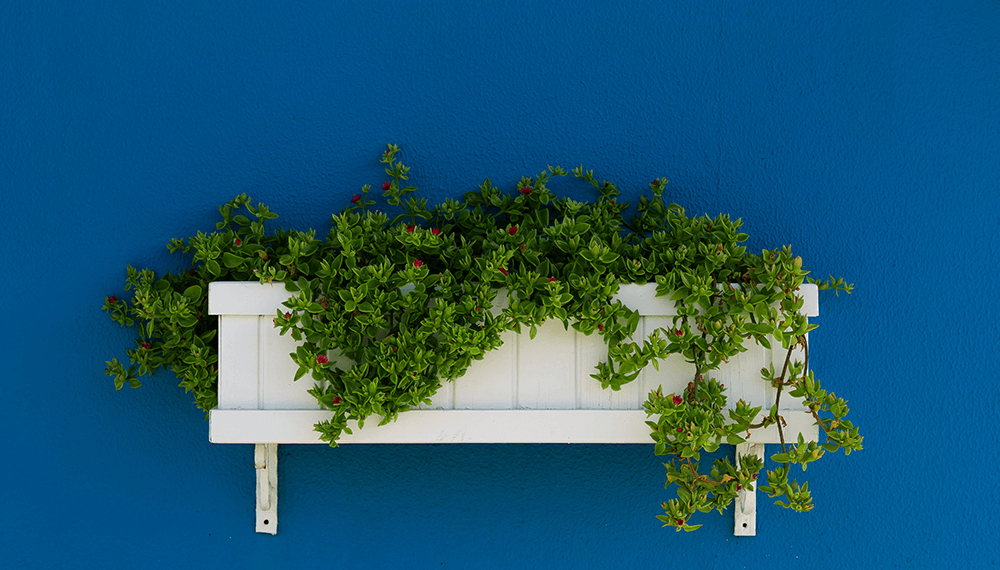 blue wall with white wooden plant box