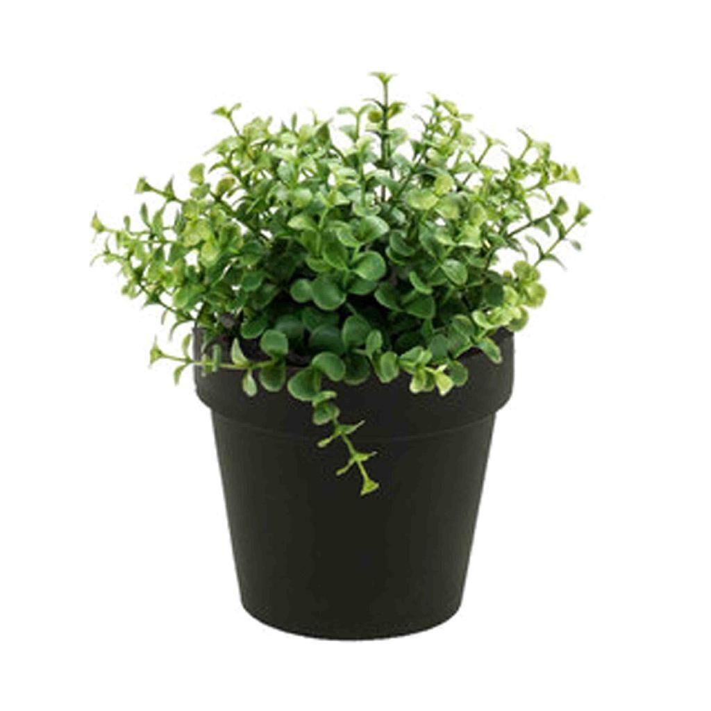 artificial eucalyptus in black pot
