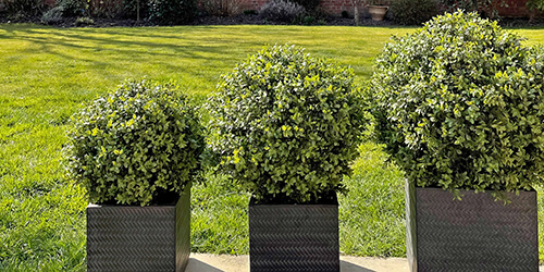 Artificial trees - indoor faux palm tree in pot next to two lanterns