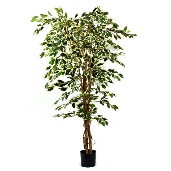 Artificial Ficus Tree Premium Variegated 5ft 150cm 54 99 Inspirations Wholesale